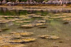 Mull landscape 2019 16 (chris-parker) Tags: mull iona scotland beach rocks sand yacht sunset sea pinks seaweed sailing ship traigh ban boat rockpool puppy cal mac caledonian macbrayne