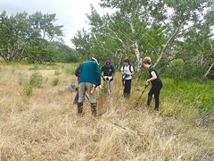 NCC Weed Pull (Oldman Watershed) Tags: rebekkah sydney outreachassistant weedpull ncc natureconservancycanada waterton lakes national park shovels digging knapweed volunteer group work grass summer 2019