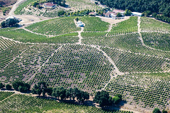 S240821-8841 (classic.visions) Tags: aerial vineyard