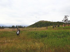 NCC Weed Pull (Oldman Watershed) Tags: rebekkah sydney outreachassistant weedpull ncc natureconservancycanada waterton lakes national park shovels digging knapweed volunteer hills grass sky summer 2019