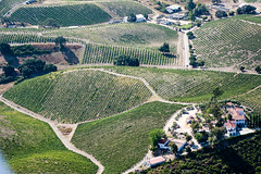 S240821-8839 (classic.visions) Tags: aerial vineyard