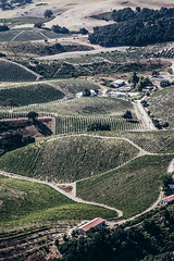S240821-8837 (classic.visions) Tags: aerial vineyard