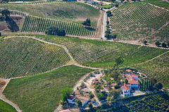 S240821-8840_HDR (classic.visions) Tags: aerial vineyard