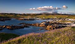 Fidden scene 2 (chris-parker) Tags: mull iona scotland beach rocks sand yacht sunset sea pinks seaweed sailing ship traigh ban boat rockpool puppy cal mac caledonian macbrayne