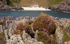 Beach nr Uisken, Mull (chris-parker) Tags: mull iona scotland beach rocks sand yacht sunset sea pinks seaweed sailing ship traigh ban boat rockpool puppy cal mac caledonian macbrayne