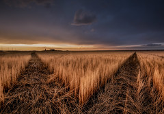 FORK IN THE ROAD (WilsonAxpe) Tags: agriculture fork landscape farm field sunset colorado