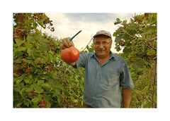 Jardin ouvrier_MG_4035 -1 (jeanmichelchristian) Tags: jardin sélestat alsace été tomate légumes jardinier