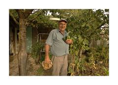 Jardin ouvrier_MG_4032 -1 (jeanmichelchristian) Tags: jardin sélestat alsace été légumes concombre jardinier