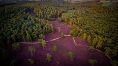 Grafheuvels Baars. Overijssel (ShotsBySteven) Tags: drone aerial luchtfoto heide natuur netherlands nature heather woods bos bomen landscape landschap