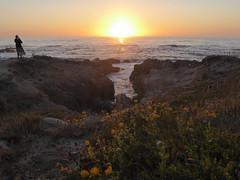 8/14/19 19:51 (joncosner) Tags: stars4 2019 california flora flowers monterey norcal pacificgrove photographers sunset