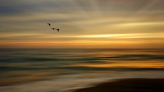 A Kiss Goodnight (Christina's World :) Tags: image0263 impressionistic icm ocean scenic sandiego sky sea seascape sunset gold clouds sunburst sunbeam landscape water waterscene california creative colorful birdsflying birds dramatic ducks three 7752 intentionalcameramovement kurtpeiser fragiletouch digitalart transcendental geese