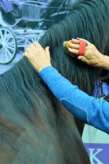 2019 Kastelentocht (Steenvoorde Leen - 14.8ml views) Tags: 2019 doorn utrechtseheuvelrug kastelentocht kastelentochtdoorn aanspanning landauer riding rijtuig carriage paarden pferde horses kutsche karos mensen people outdoor koetsen paard horsse pferd hand handen hands