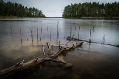 Low water III (mabuli90) Tags: finland lake water tree wood forest sky grass