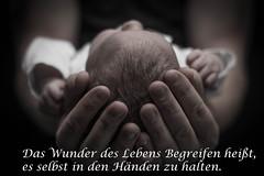 Newborn_B&W (phizidesgn) Tags: baby newborn fotografie