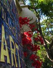 ART (Rand Luv'n Life) Tags: odc our daily challenge balboa park san diego california spanish village wall art photograph tile mural sign bougainvillea sun lit trees outdoor