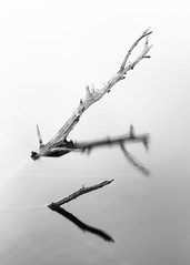 Some Kind of Meaning (John Westrock) Tags: canonef100400mmf4556lisusm canoneos5dmarkiii blackandwhite branches fineart johnwestrock longexposure midwest minimal minimalism monochrome nature nopeople northwoods outdoors reflection sticks summer vertical water whitebackground wisconsin
