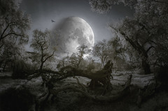 Hunting Moon - Toned IR (byron bauer) Tags: trees sky moon cold bird grass composite night clouds landscape ir haze hill meadow surreal eerie luna owl infrared oaks dreamlike toned lunar hunt descansogardens 720nm d70irconversion byronbauer