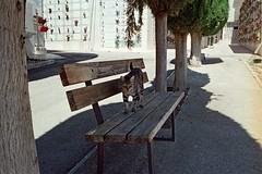 190821 ancora la mia amica del cimitero (enricospinozzi) Tags: gatta cimitero film analog enricospinozzi