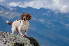 In the mountain (The Papa'razzi of dogs) Tags: zigzag spaniel landscape pet nature mountains outdoor cocker hund dog animal