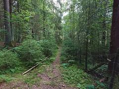 Hovskogen (mtbboy1993) Tags: sonycameraapp rawtherapee hovskogen askim indreøstfold østfold norge forest skog fence singletrack sti tursti trail