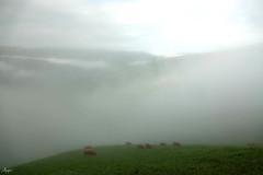 Valle del Pas,valle de nieblas, preludio de hermosos verdes (Mariano Aspiazu) Tags: cordilleracantábrica cantabria castrovalnera brenas branizas braguia brumas elpas españa montañas montaña marianoaspiazu montesdelpas naturaleza neblina nieblas vallespasiegos vegadepas valledelpas valles vega