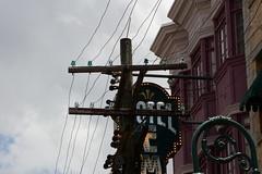 Insulators at Universal Studios - Orlando, Florida_P1050950 (Wampa-One) Tags: universalorlandoresort universalstudiosflorida orlandofl insulators glass