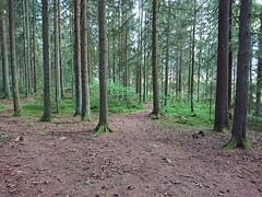 DSC_1445edit (mtbboy1993) Tags: askim forest foresttrail hovskogen indreøstfold norge norway rawtherapee singletrack skog skogsti sonycameraapp tursti østfold østfoldfylke
