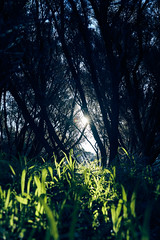 Into the Light (Stueyman) Tags: sony alpha a7 a7ii wa westernaustralia au australia woodmanpoint perth grass sunlight star light zeiss green batis batis240cf 40mm outside