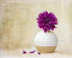 flower still life (Chapter2 Studio) Tags: stilllife simple flower sonya7ii sony90mm pink texture art fineart soft