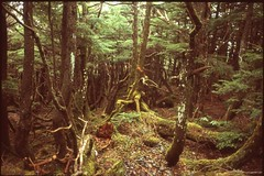 (✞bens▲n) Tags: pentax lx velvia 100f carl zeiss 35mm f24 flektogon film slide japan nagano woods trees moss forest