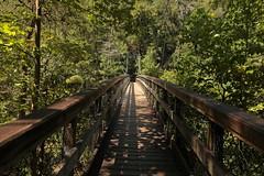 Tallulah Gorge suspension bridge (hennessy.barb) Tags: tallulahgorge tallulahgorgesuspensionbridge georgia hiking outdoors getoutside takeahike barbhennessy