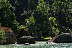 Mata Atlantica (Edgard.V) Tags: brasil brésil brazil brasile forêt tropicale primaire rain forest floresta selva paraty rio de janeiro
