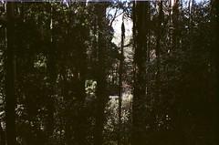 Plants (Matthew Paul Argall) Tags: beirettevsn 35mmfilm ektar100 kodakektar100 100isofilm plant plants