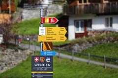 Khám phá Wengen - ngôi làng không có xe hơi ở Thụy Sĩ (quynhchi19102016) Tags: ve may bay gia re di thuy si