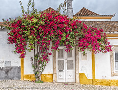 Small House with blooming Bush (WS Foto) Tags: algarve tarvira portugal europe eu red blossoms busch bush blooming blühend haus house sky blue himmel blau yellow socket door white plaster pflaster