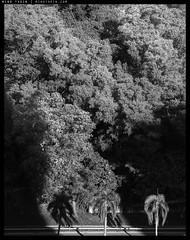_2E90096 copy (mingthein) Tags: thein onn ming photohorologer bw blackandwhite monochrome