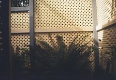 Criss-cross pattern (Matthew Paul Argall) Tags: kodakbrownieno2 fixedfocus 120film 120 mediumformat lomographyfilm