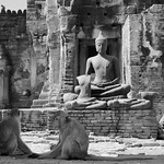 Buddha And Monkeys