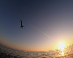 Pelican flying solo over the ocean surface into the sunset (davidweedallphotography) Tags: beach beachphotography beaches seascape summer sea sun sunrisephotography sunset nature naturephotography nationalgeographic natgeoyourshot nature'sbest natgeo naturallight bird birds birdsflying flying soaring california californiaphotography ocean oceanphotography outside outdoors gopro images photography