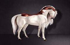 Dutch (SharkyBox) Tags: teegle teeglepet avatar secondlife horse horses coat