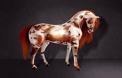 Keanu (SharkyBox) Tags: teegle teeglepet avatar secondlife horse horses coat