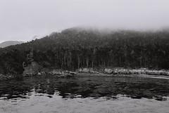Still (bingley0522) Tags: nikkormatft3 nikkor50mmf18 xp2 pointlobos coastalcalifornia montereycounty autaut californialandscape fog trees