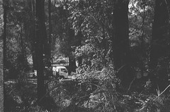 Plants (Matthew Paul Argall) Tags: smenasymbol 35mmfilm blackandwhite blackandwhitefilm kentmerepan100 100isofilm forest