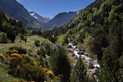 Mountain Spring Scenery