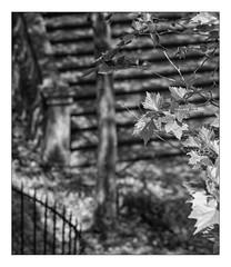 71 [titre arbre d'argent] (Armin Fuchs) Tags: arminfuchs lavillelaplusdangereuse würzburg kreuzweg käppele fence anonymousvisitor thomaslistl wolfiwolf jazzinbaggies stairs stairway tree light shadows stripes 6x7 diagonal hff