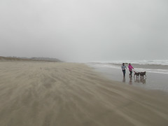 Wind assisted dog walk (Lostinplace) Tags: oregon beach sand wind dog surf