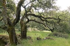Annadel State Park (2) (Teelicht) Tags: california freizeitbeschäftigung kalifornien mountainbikefahren mountainbiken nordamerika northamerica sonomacounty trioneannadelstatepark usa unitedstatesofamerica vereinigtestaaten mountainbiking