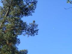 Kontrastea (eitb.eus) Tags: eitbcom 18363 g153429 tiemponaturaleza tiempon2019 verano bizkaia zaldibar unaigarcia