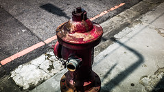 fire plug   iv (steve: they can't all be zingers!!! (primus)) Tags: leicam9 canonltmm3935mmf28 leica lightroom6 taiwan taichungtaiwan taichung primelens canon35mmf18ltm