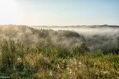 19082019-DSC_0046 (vidjanma) Tags: taverneux arbres brume matin vallée